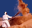 winnow the grain