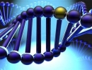 DNA and stress