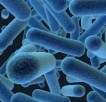 bacteria medicine