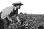 migrant-worker-economic-slavery