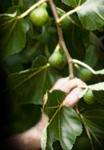 bearing-fruit