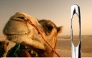 camel-and-needle-internet