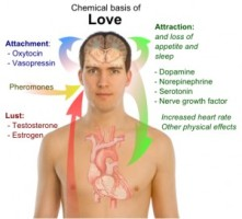 chemical-basis-love-300x272