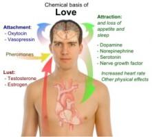 chemical-basis-love-300x272