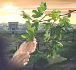 fruitless-fig-tree1