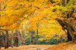 AutumnLeaves-1
