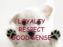 good sense puppy